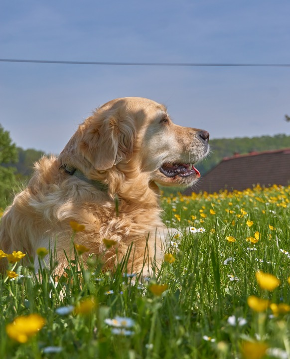 Favorite Animal, Dog, Garden, Pet, Animal, Grass