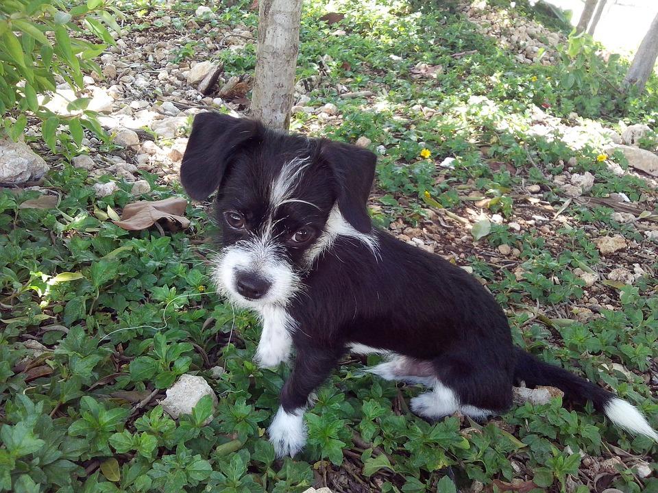 Puppy, Dog, Animals, Loyalty, Friend, Grace, Happy
