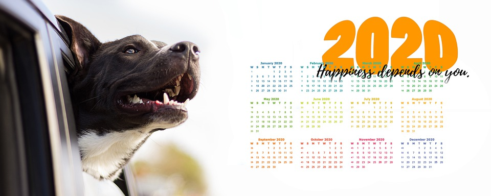 Calendar, Joy, Dog, Happy, Auto, Head, Car Window, 2020