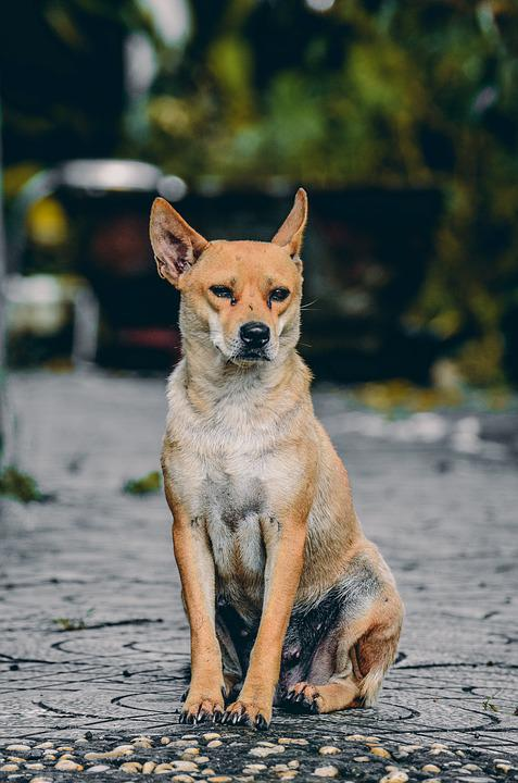 Dog, Animal, Sad, Home, Wait, Small, Looks