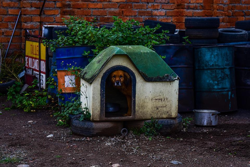 Dog House, Architecture, Outdoors
