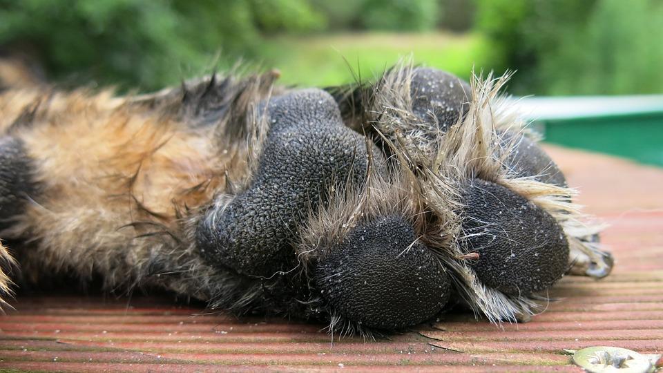 Dog's Paw, German Shepherd, Alsatian, Dog Imprint, Dog