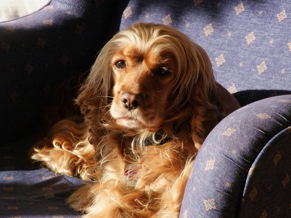 Dog In The Armchair, Dog In The Sunshine, Brown Dog