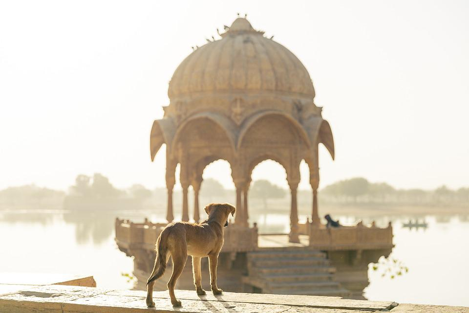 Dog, Rajasthan, Jaisalmer, Travel, India, Trip