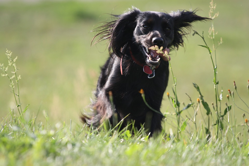 Animal, Dog, Meadow, Jogging, Grass, Spacer, Teeth