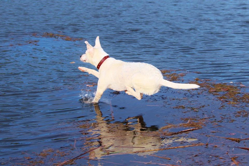 Dog, Jump, Water, Joy, Movement