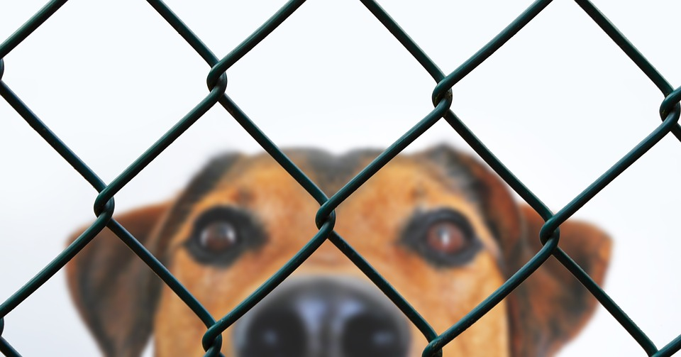 Dog, Fence, Grid, Imprisoned, Animal Welfare, Dog Look
