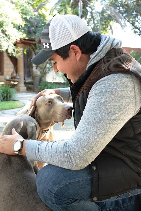 Dog, Happy, Pet, Animals, Friend, Loyalty, Animal