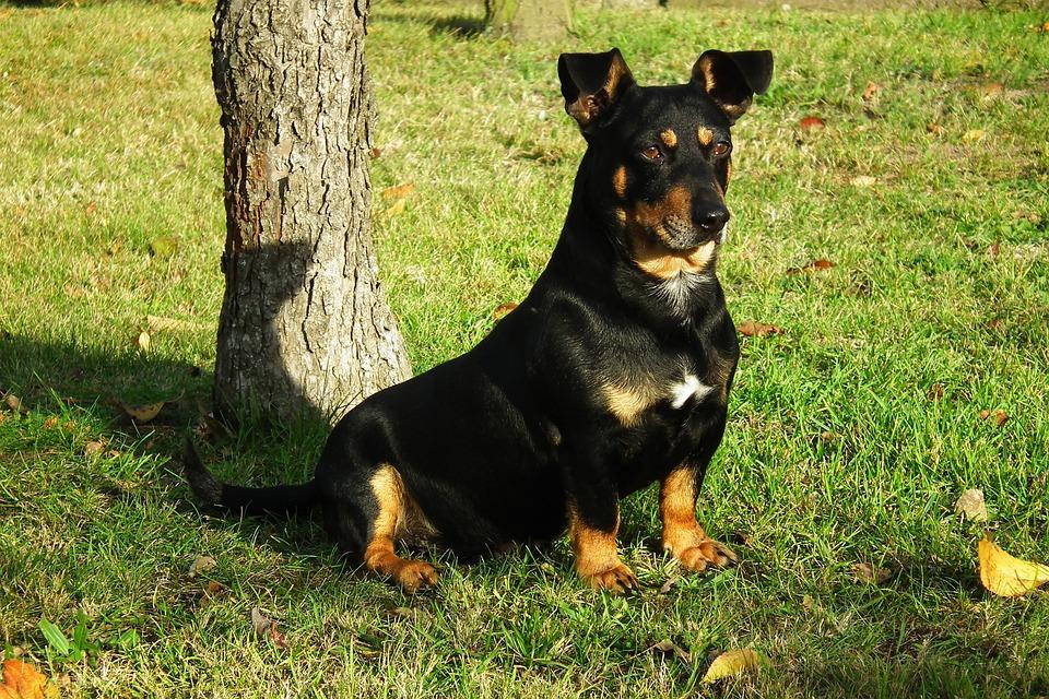 Dog, Animal, Portrait, Nice, Mammal, Friend, Furry