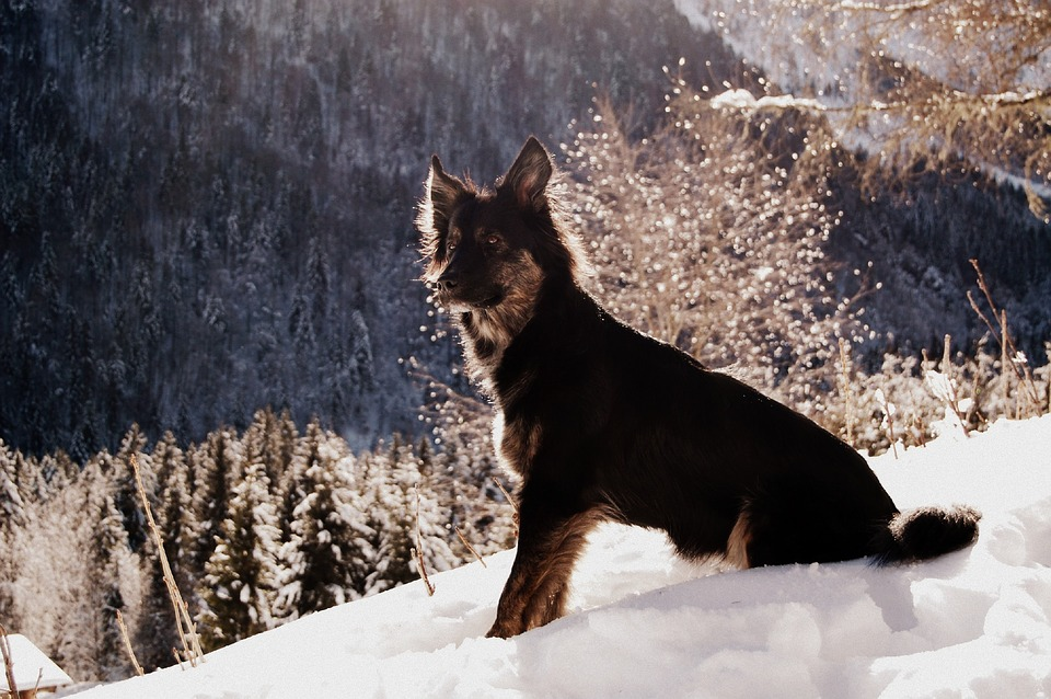 Dog, Black Dog, Snow, Mountain