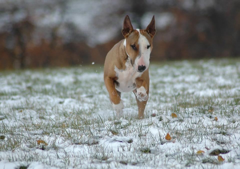 Animal, Nature, Winter, Cute, Mammal, Dog