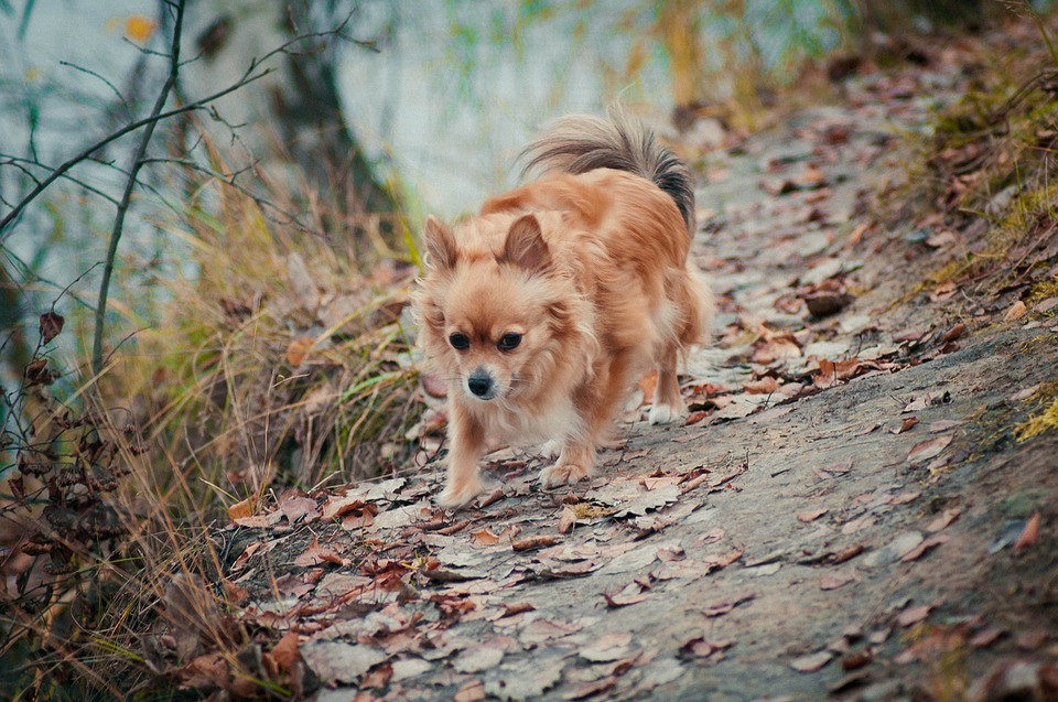 Dog, Autumn, Animal, Leaves, Forest, Nature