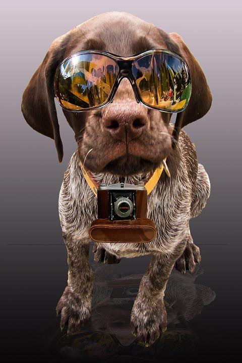Partner, Press, News, Dog, Sunglasses, Photo, Funny