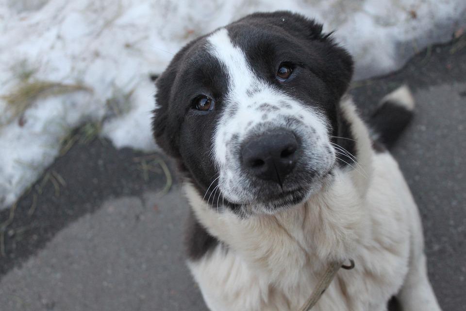 Dog, Puppy, Pet, Animals, Man's Best Friend, Each, View