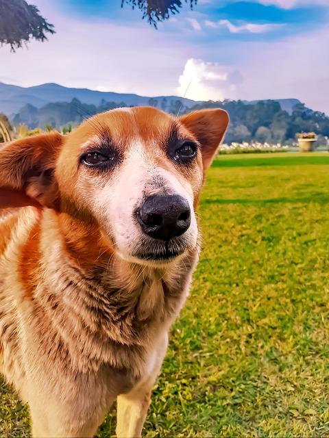 Dog, Puppy, Pet, Ice Dog, Fur, Jarvis, Sri Lankan Dog