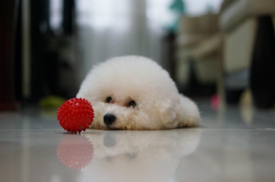 Dog, Pets, Indoor, Reflection