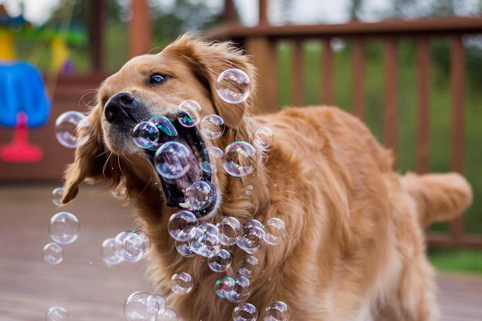 Dog, Bubble, Play, Funny