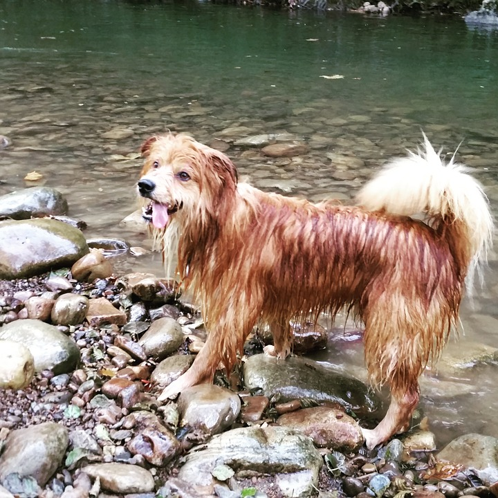 Dog, Happy, River, Nature, Water, Play