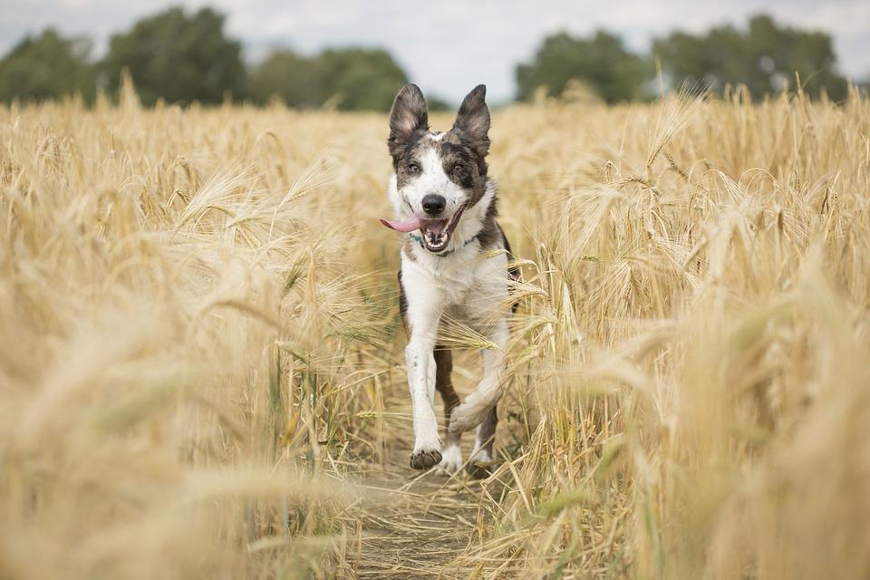 Dog, Pet, Animal, Running, Playful, Fun, Mammal