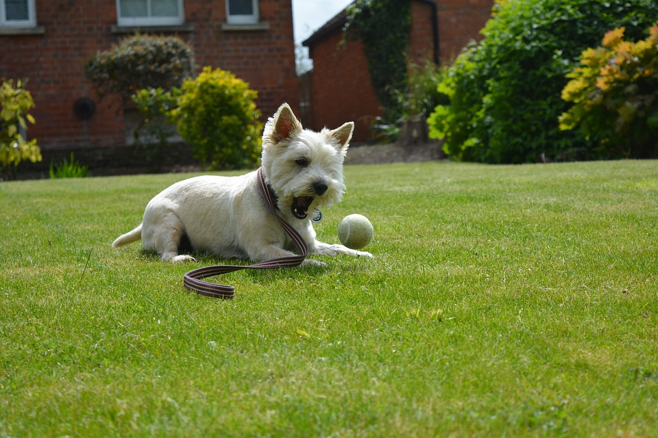 Dog, Dog Playing, Canine, Terrier, Play, Pet, Cute