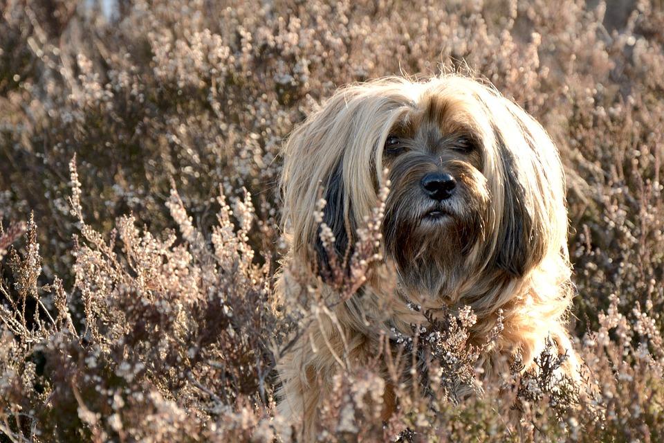 Dog, Face, Portrait, Head, Animal, Wildlife Photography