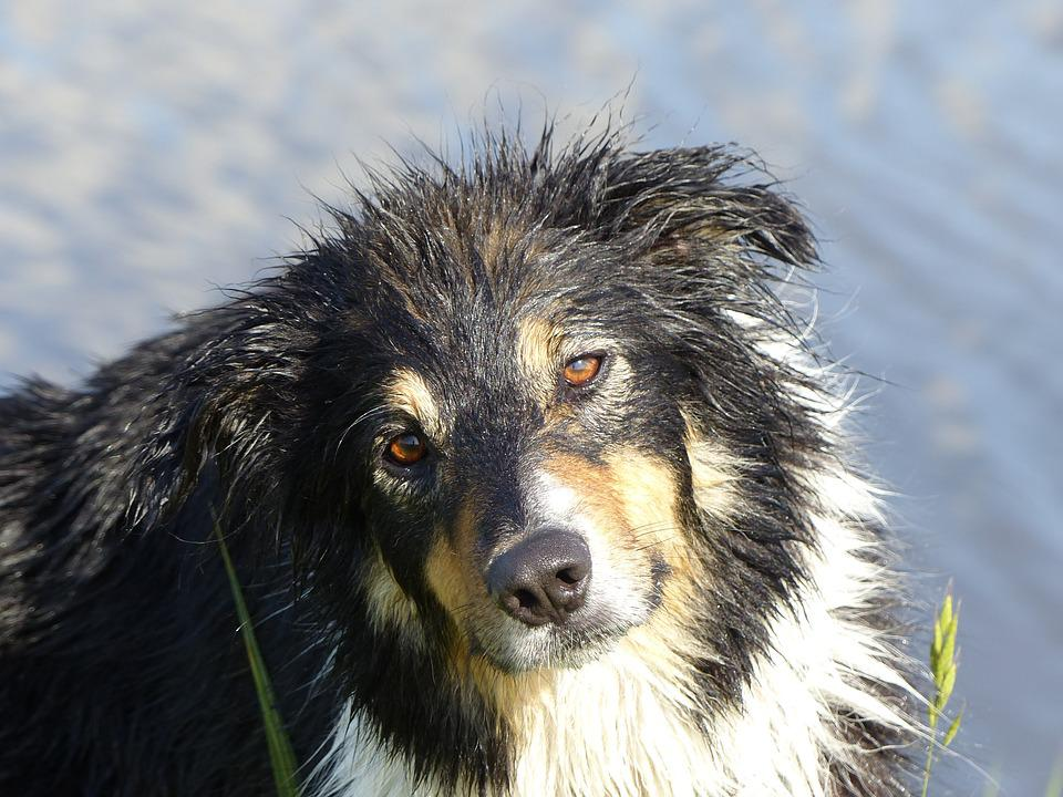 Dog, Dogs, Pet, Sweet, Animal, Portrait, Three Colors