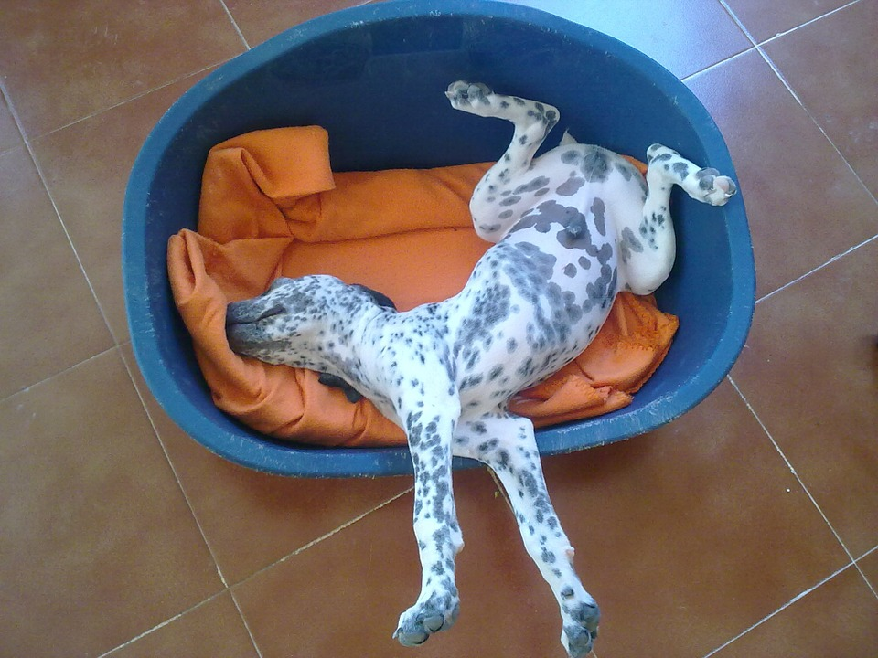 Dog, Puppy, Pet, Happy, Fun