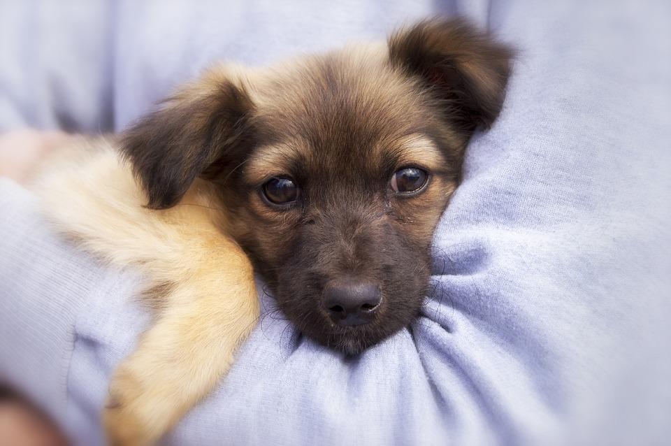 Dog, Puppy, Dog Face, Protection, Hug, Cute, Adorable