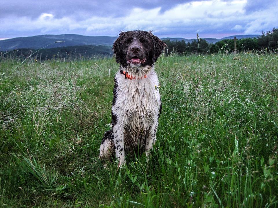 Münsterland Is, Mountain, Critter, Rain, Water, Dog