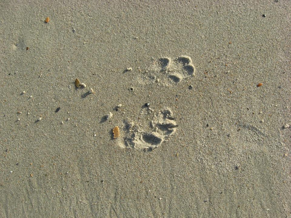 Dog, Prints, Footprints, Sand, Beach, Ocean