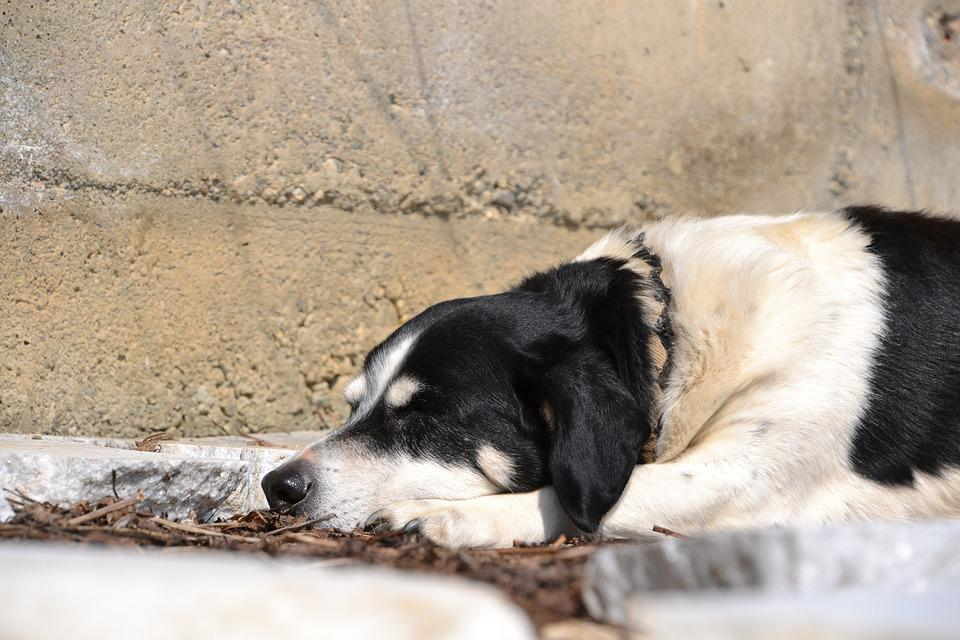 Dog, Animal, Black And White, Sleep