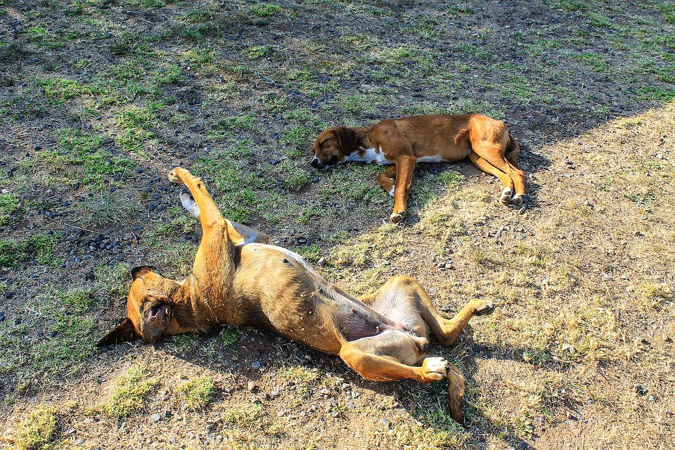 Dog Sleeping, Dogs, Animals, Pets