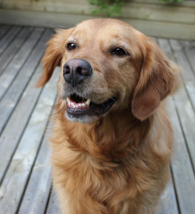 Dog, Smiling, Happy