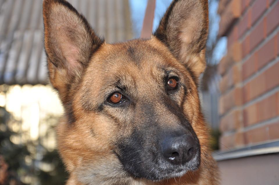 Dog, Comfort, Heat, Training, Snow, Winter, Pet