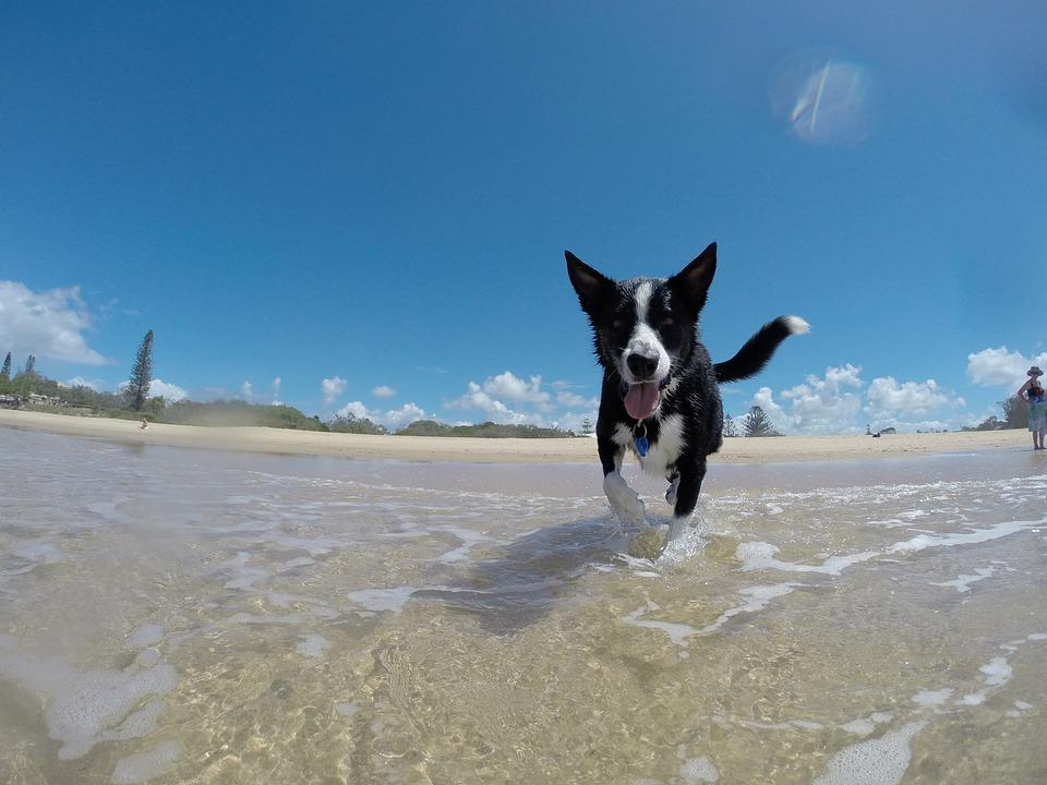 Dog, Summer, Water, Happy