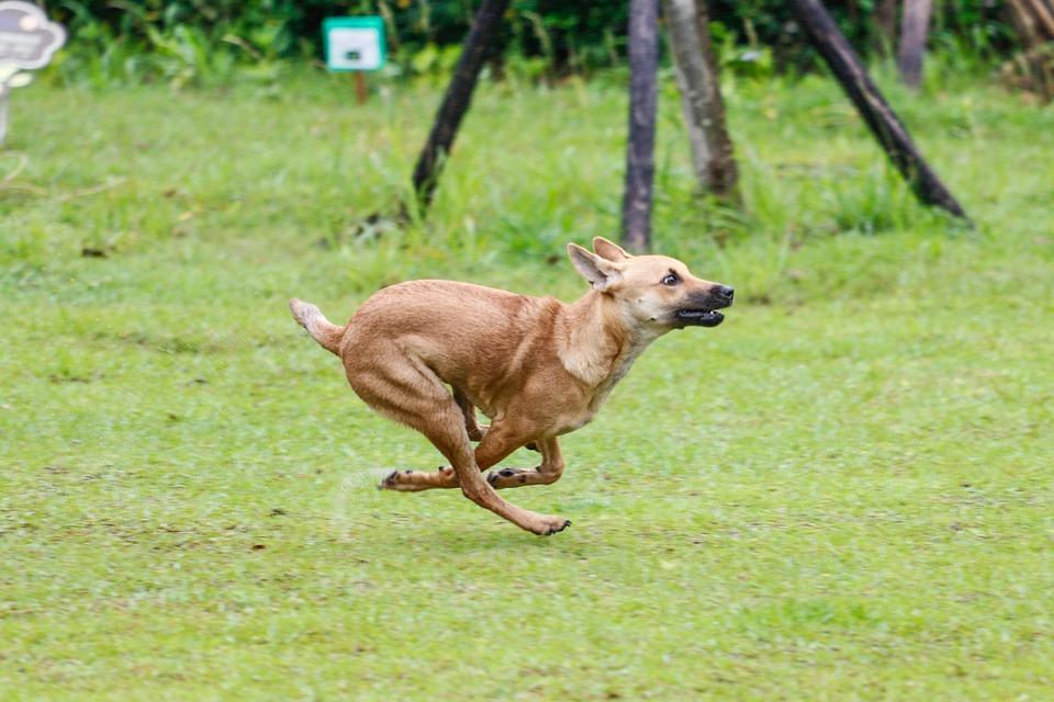 Run, Dog, Taiwan