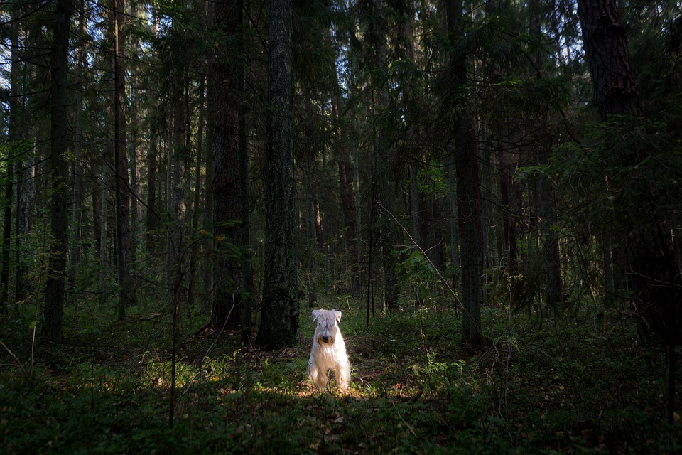 Wood, Nature, Tree, Outdoors, Dawn, Summer, Travel, Dog