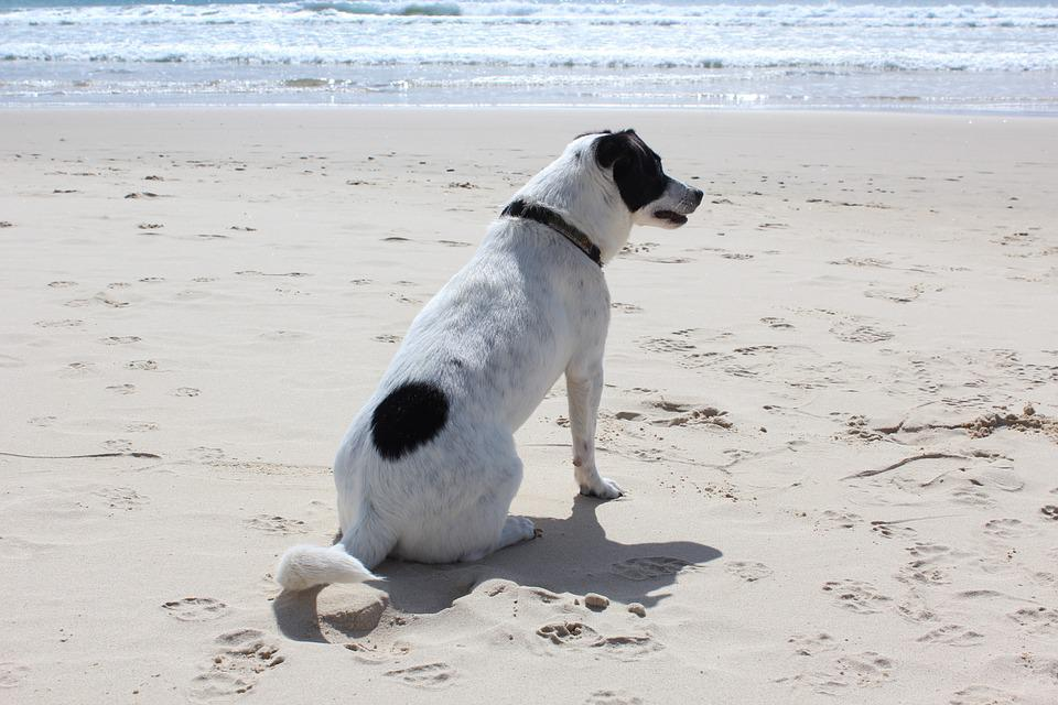Dog, Beach, Sun, Pet, Sea, Vacation, Animal, Ocean