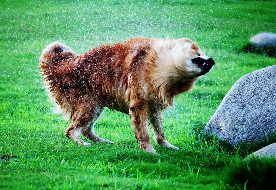 Dog, Splashed, Water, Pet, Animal, Happy, Splash, Cute