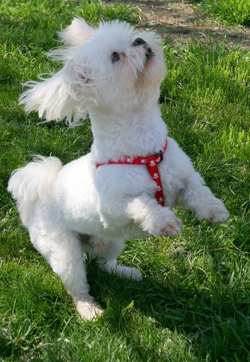 Dog, White, Pet, Play