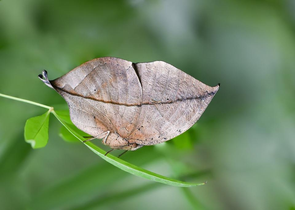 Butterfly, Kelebek, Macro, Doğa, Nature, Böcek