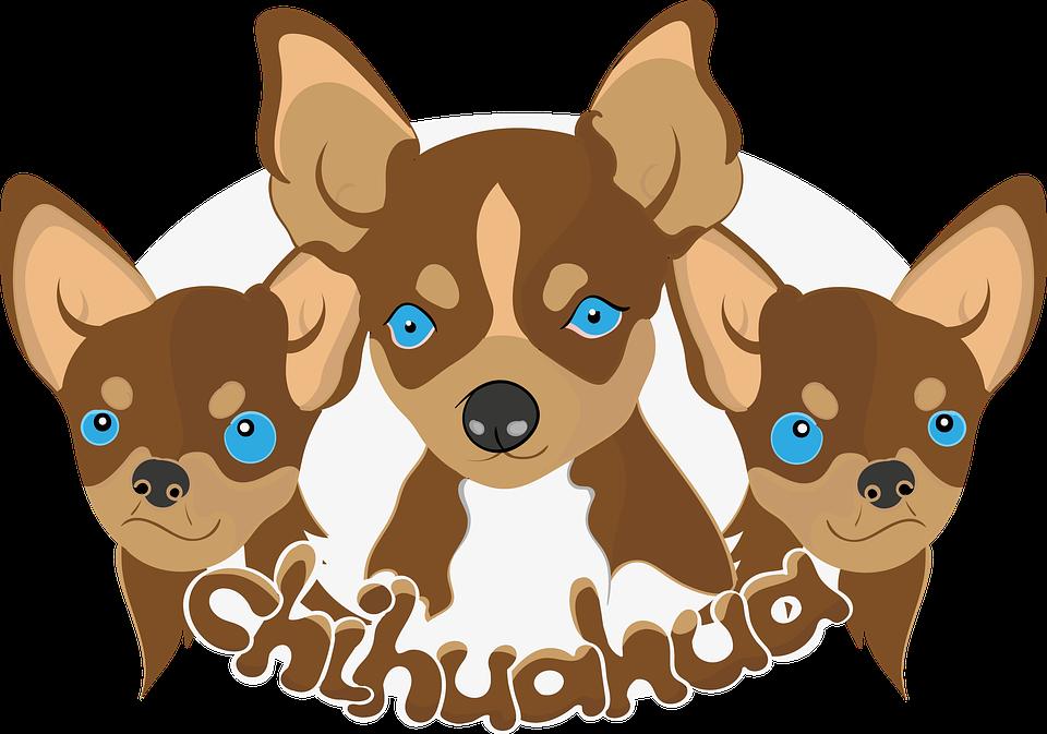 Doggies, Chihuahua, Dogs