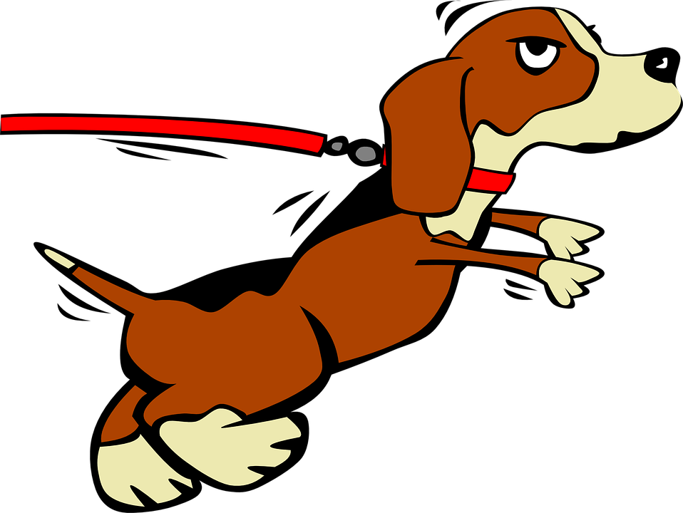 Dog, Puppy, Leashed, Domestic, Doggy, Canine, Pet