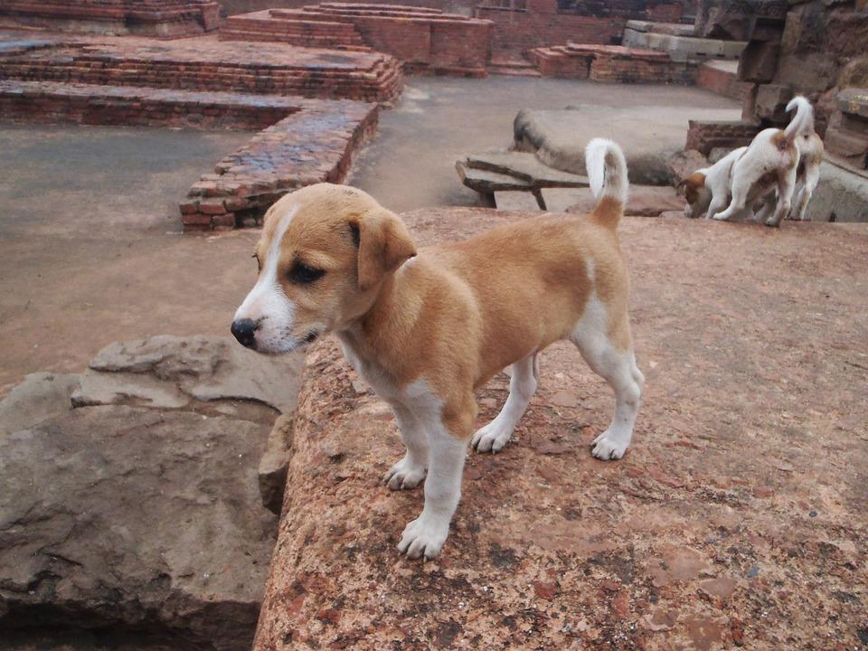 Dog, Animal, Mammal, Puppy, Cute, Pet, Adorable, Doggy