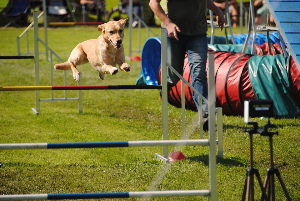 Dogs, Agility, Jump, Hundesport, Fun, Competition