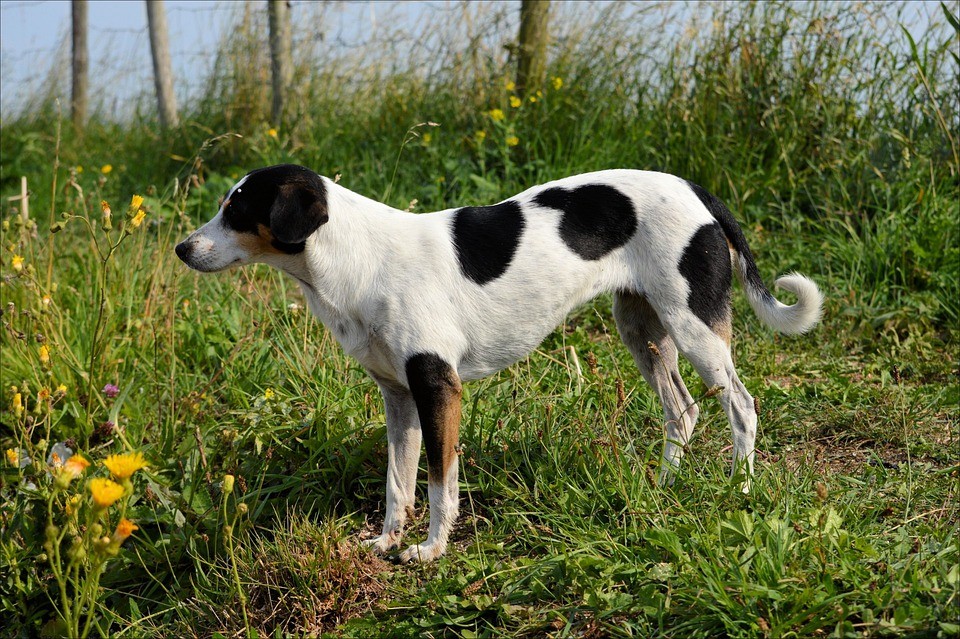 Dogs, Animls, Mammals, Puppy, Doggy, Black, White