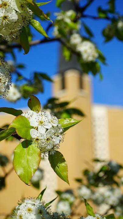 Church, Spring, Easter, Flowers, Dogwood, Bloom, Sky
