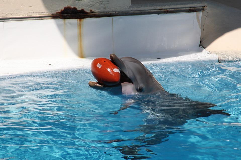 Dolphins, Marine Mammals, Dolphin, Water, Aquarium