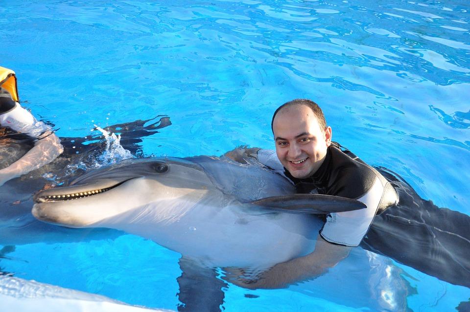 Dolphin, Friendship, Peace, Swimming, Animal, Sea