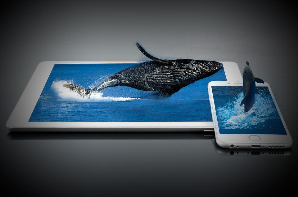Whale, Dolphin, Water, Mammals, Sea, Fish, Jump, Iphone